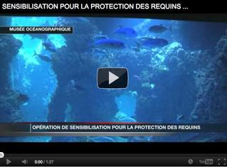 snap video sensibilisation protection requins